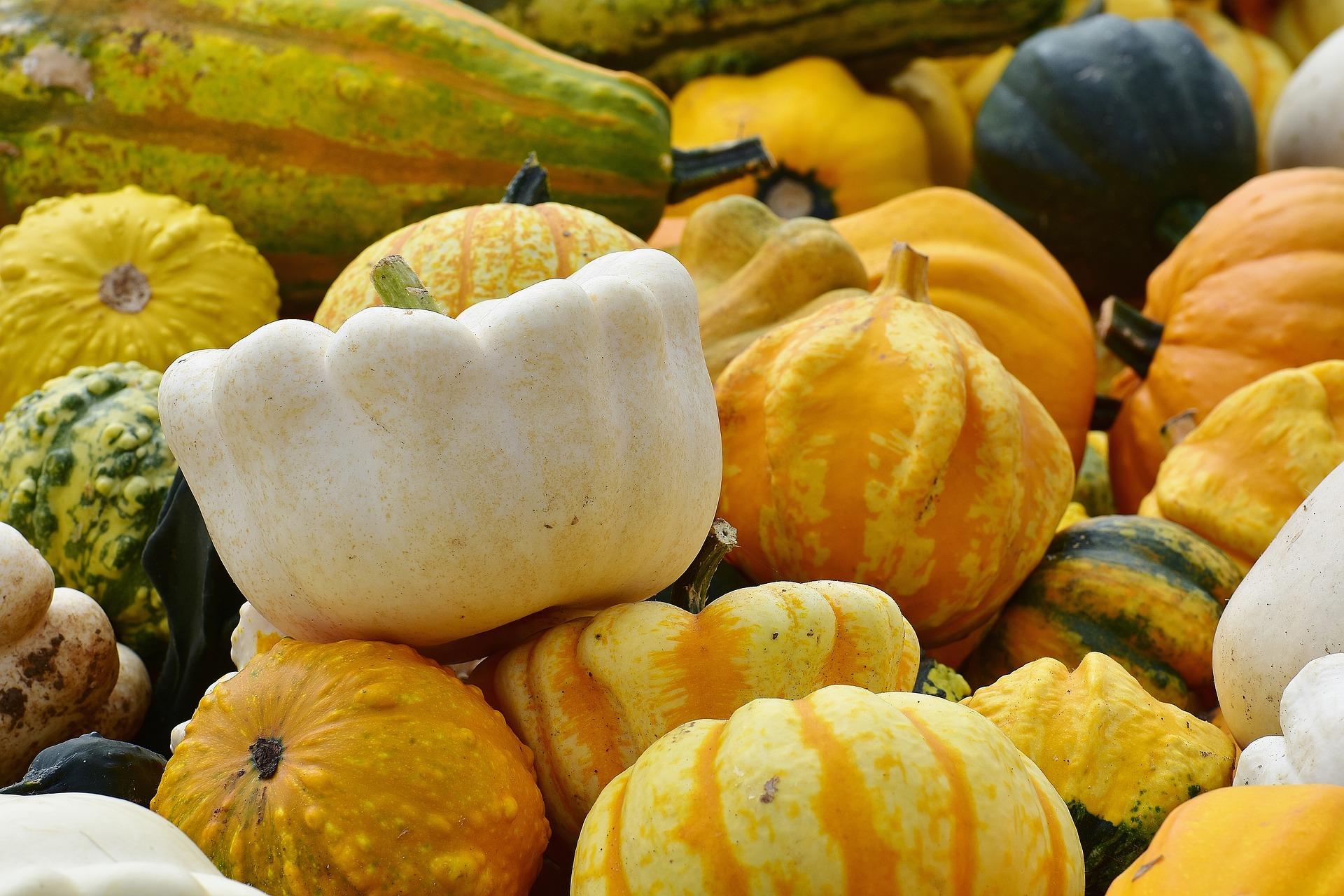 pumpkins-1642277_1920.jpg