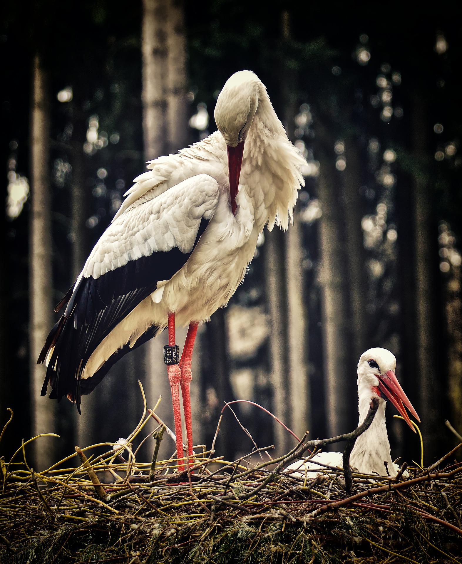 stork-3678282_1920.jpg