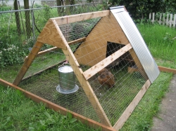 chickencoop.jpeg