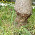 Fűkaszákkal a fák ellen?