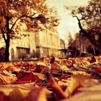 Őszi utcakép Nemes-Nagy Ágnestől