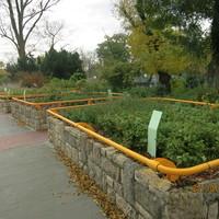 Rehabilitálták a Vakok kertjének növényzetét!