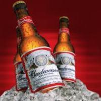 Túl 100 peren a Budweiser sör