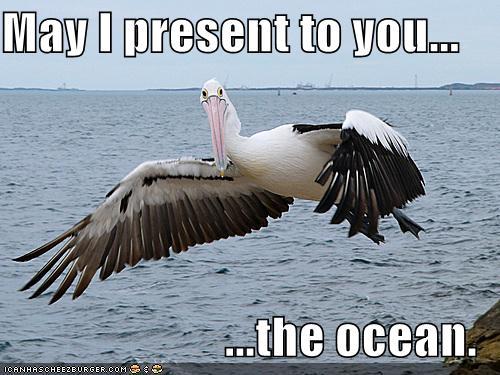 pelican1.jpg
