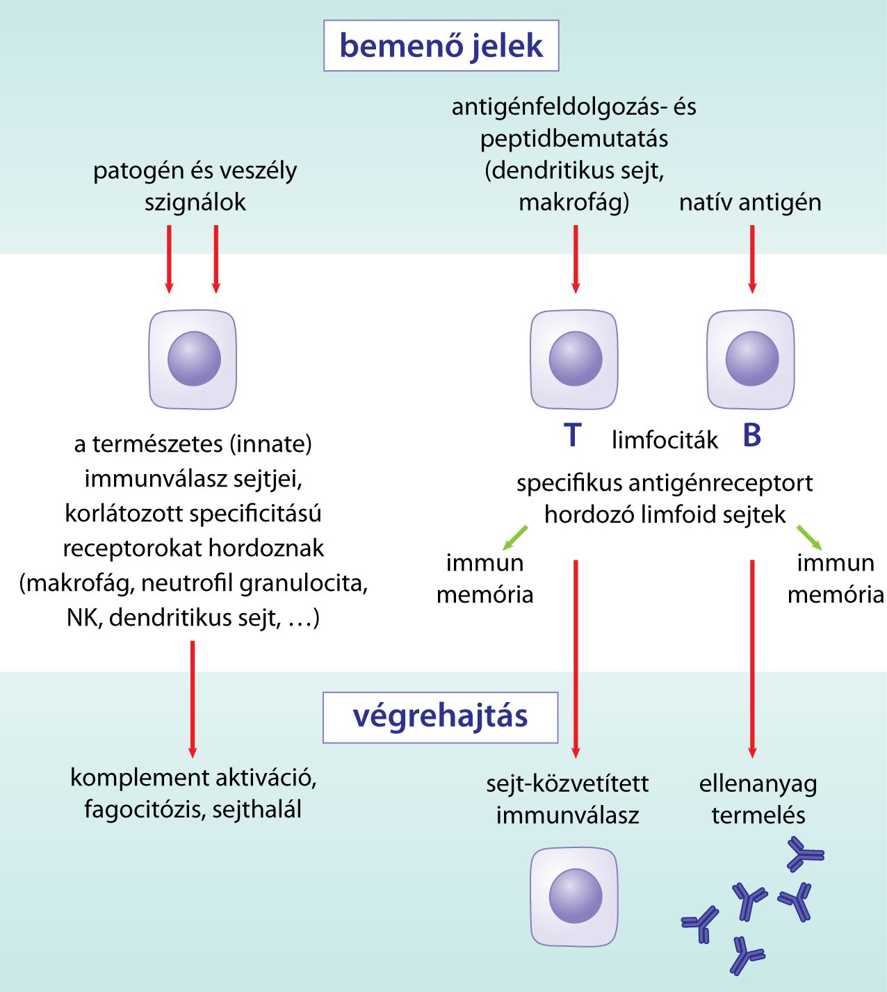 immun1.jpg