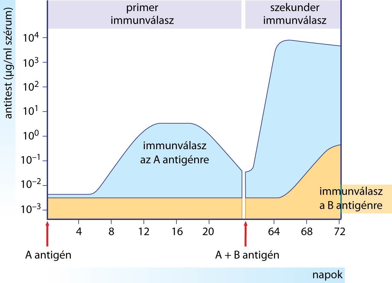 immun3.jpg