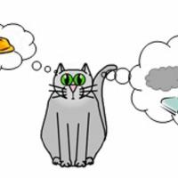 Nem csak a pormacska, de a házi cicák vére is tele van a lakásunkban lévő vegyszerekkel