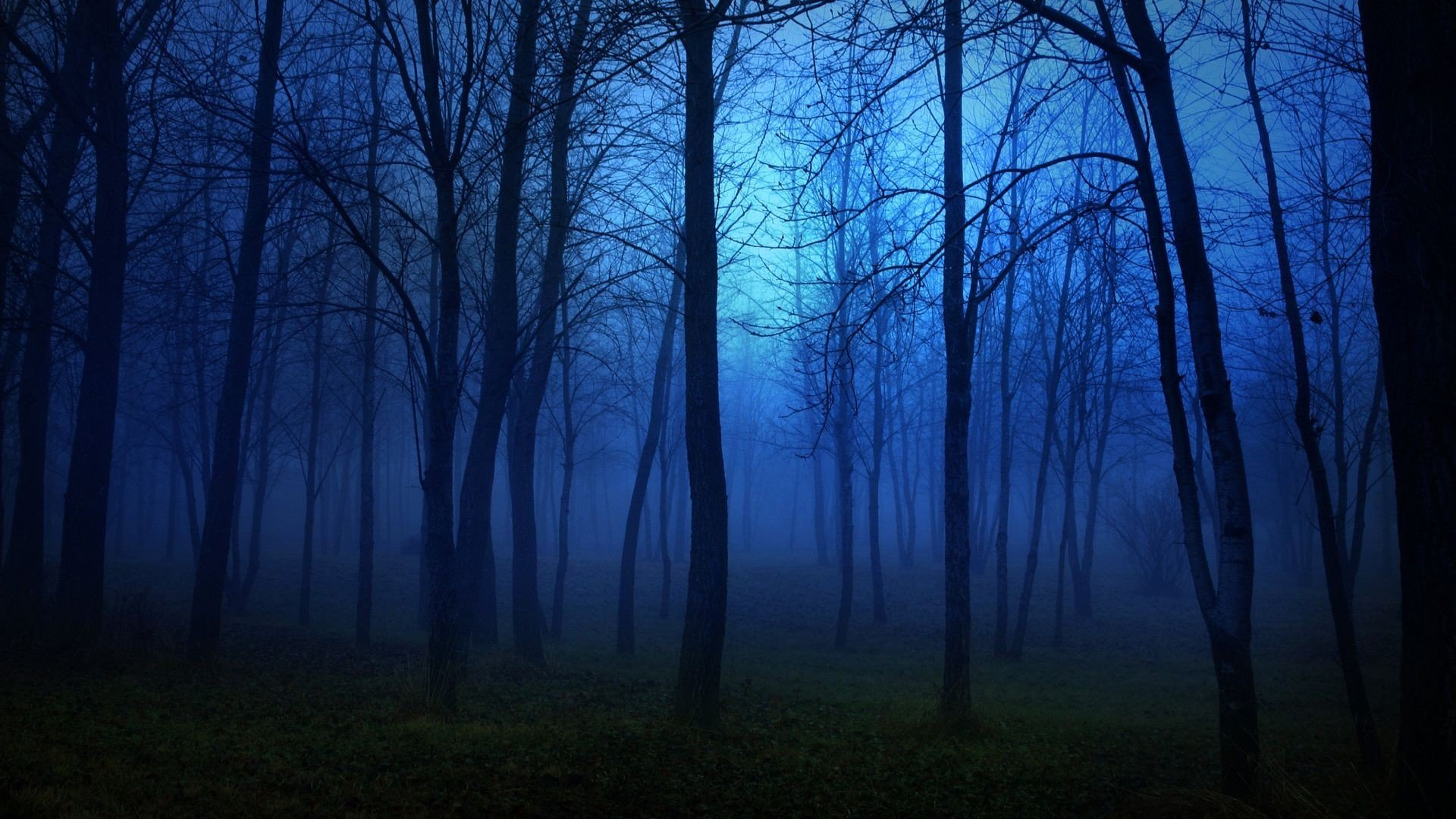 darkdownload-hd-wallpapers-beautiful-nature-landscape-spooky-night-tree-nature-fog-mist-high-definition-green-mac-backgrounds-forestforest.jpg