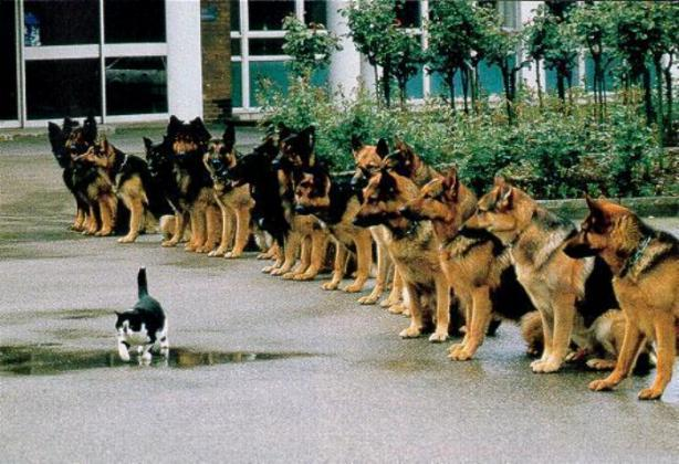 wpid-brave-cat.jpg