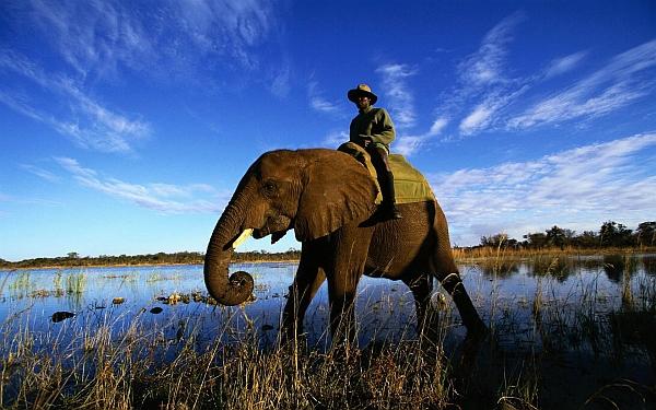 Elefánt és utasa