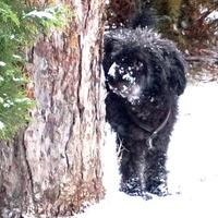 December 28.- Csorba Győző: Hó-hívogató