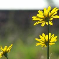 Június 3. - Nemes Nagy Ágnes: Gondolj rám virág