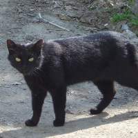 Január 13. - Romhányi József: Babonás fekete macska