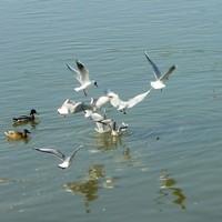 Február 9. - Ady Endre: Farsang a Duna tájon