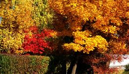 Október 1. - Radnóti Miklós: Október