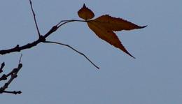 November 12. - Utassy József: Fán maradt levelek