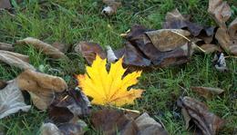 Szeptember 13. - Kányádi Sándor: Levél az erdőből