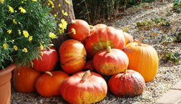 Szeptember 29. - Zelk Zoltán: Ez már az ősz