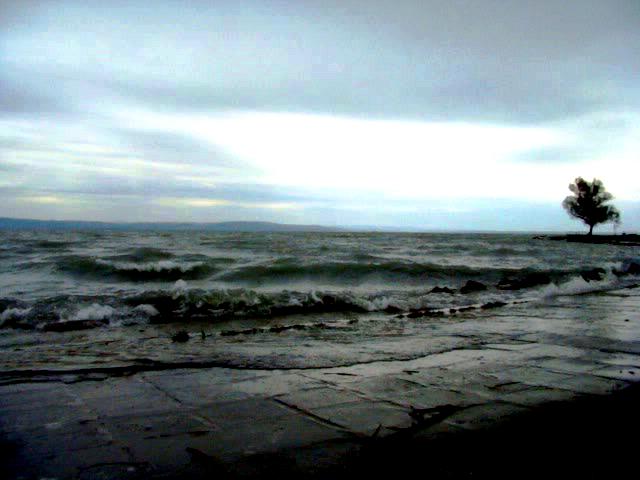 vihar.png