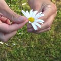 Endometriózis – a meddőség egyik oka