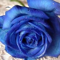 Az önbecsülés, az önbizalom és a rózsa