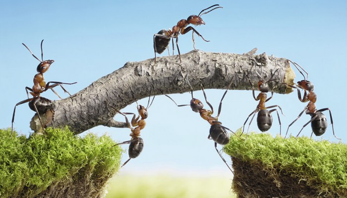 ant-team-700x400_kep.jpg