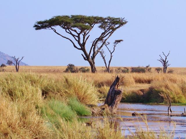 200 hely, amit látnod kell: Serengeti