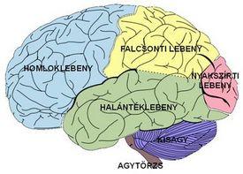 epilepszia3.jpg