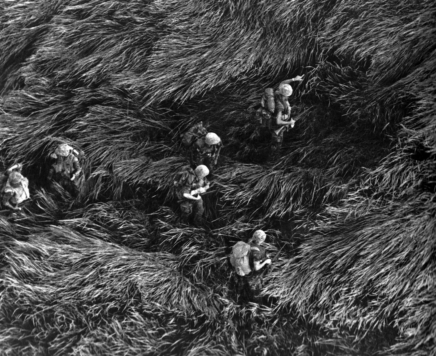 1968_11_marines_in_elephant_grass.jpg