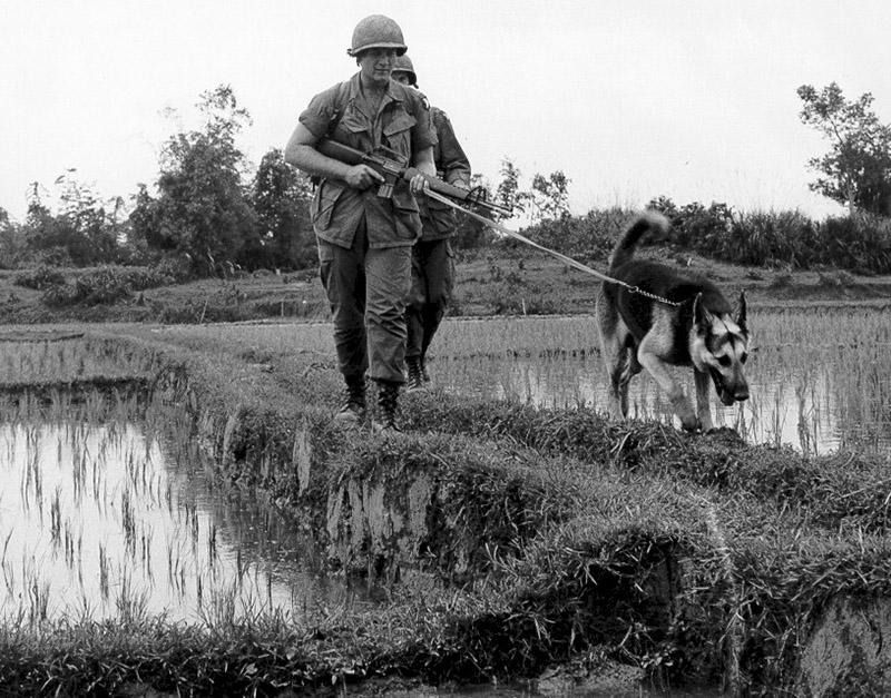 tracker_dog.jpg