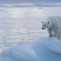 Klímaváltozás: Az évszázad blöffje?