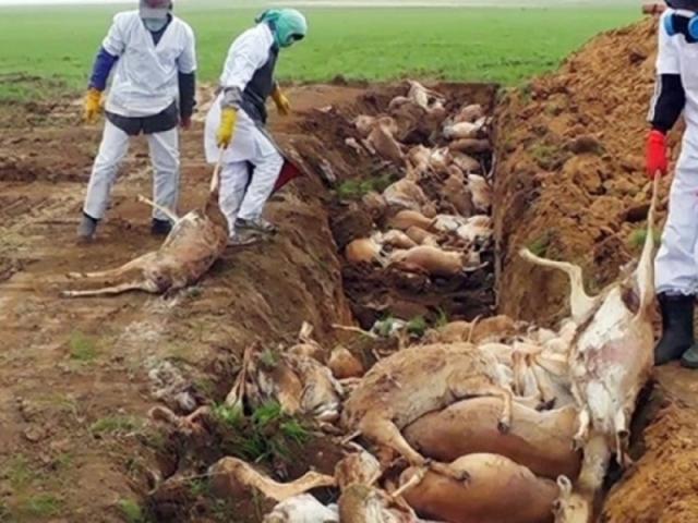 Rejtély: 4 nap alatt 60 ezer antilop pusztult el Kazahsztánban