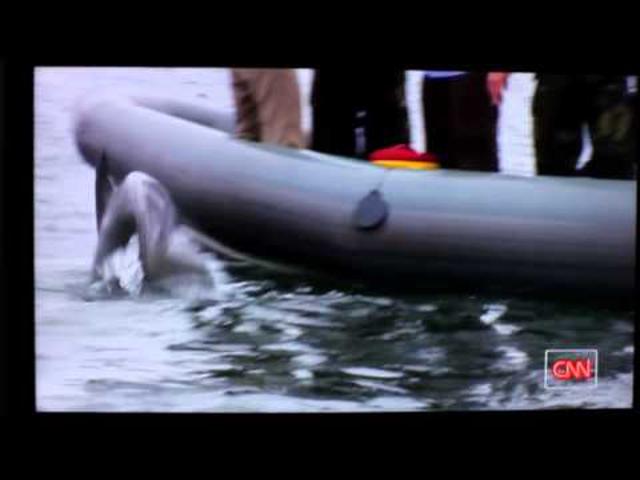 Végre! Nyugdíjazzák az aknakereső delfineket