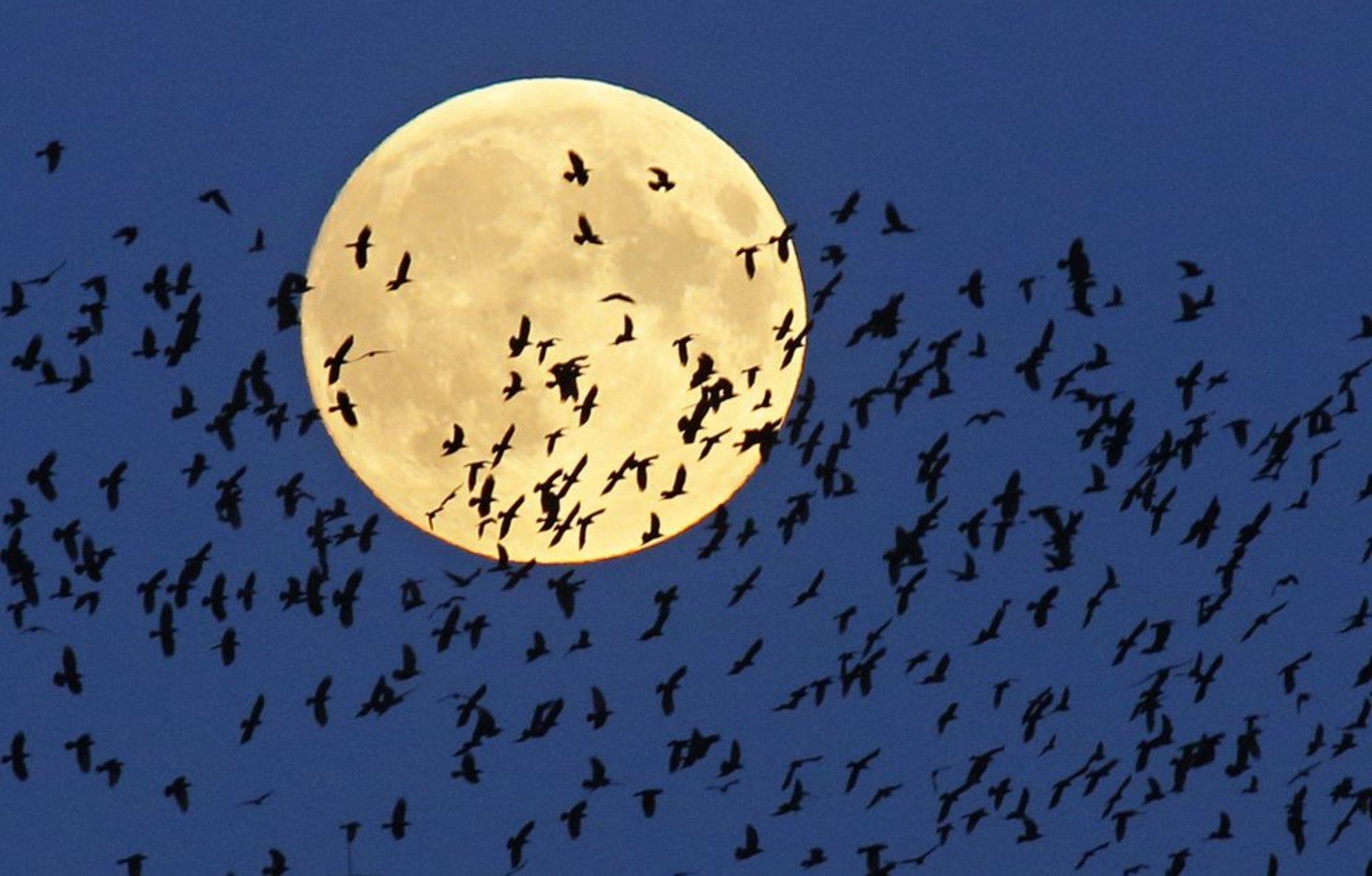 1443405183_10014861_belarus_supermoon_lunar_eclipse.JPG