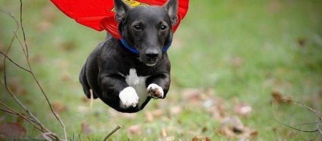 l_hu_superdog.jpg