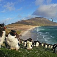 Falkland - háború a világ végén