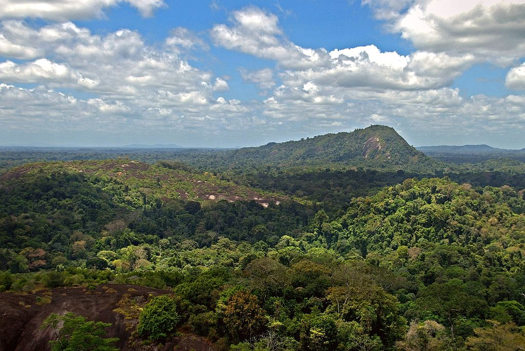 1024px-amazon_jungle_from_above.jpg