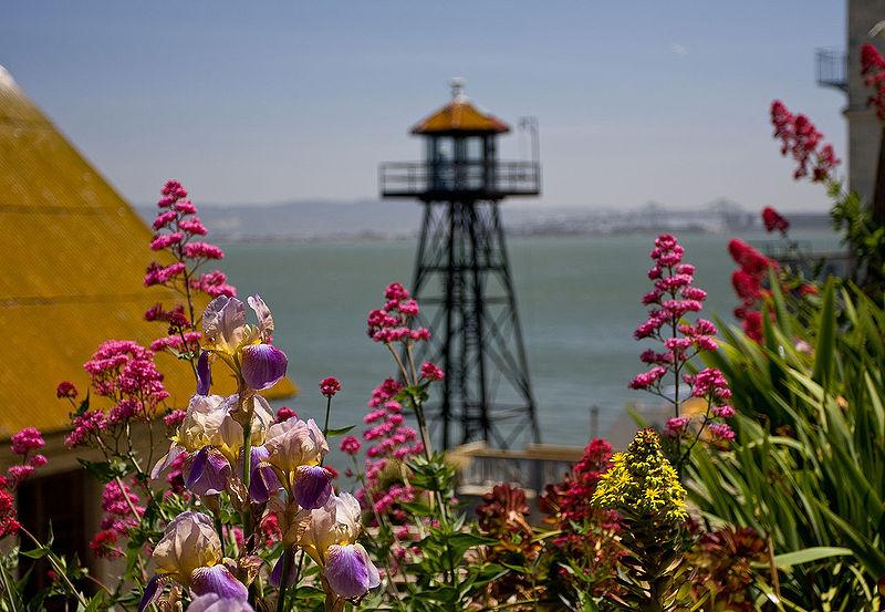 A ma már nemzeti park részét képező Alcatraz nagy részét visszafoglalta a flóra... (forrás: Wikipedia)
