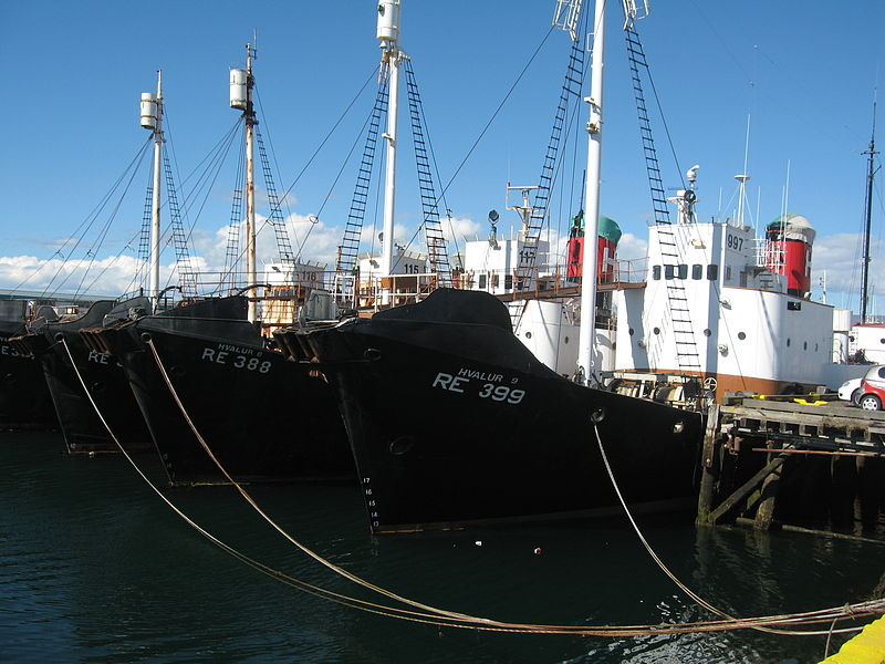 800px-icelandic_whalers_08.jpg