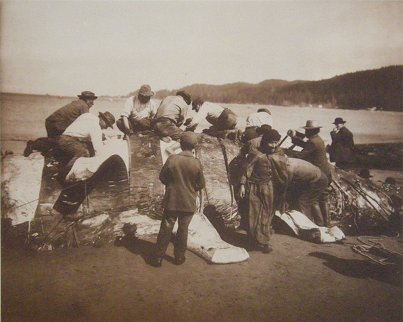 800px-indian_whalers_stripping_their_prey_at_neah_bay_1910.jpg