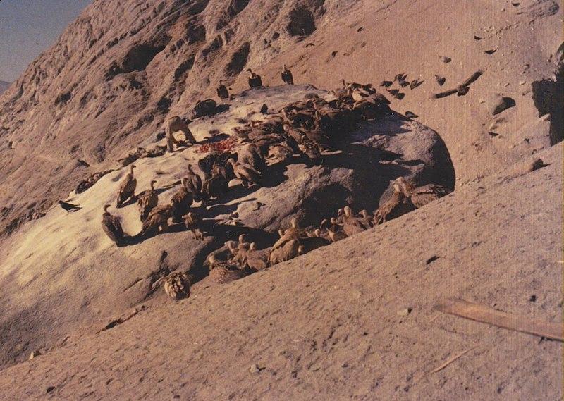 800px-vultures_on_lhasa_sky_burial_rock_1.jpg