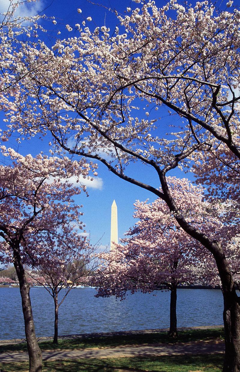 800px-washington_c_d_c_tidal_basin_cherry_trees.jpg