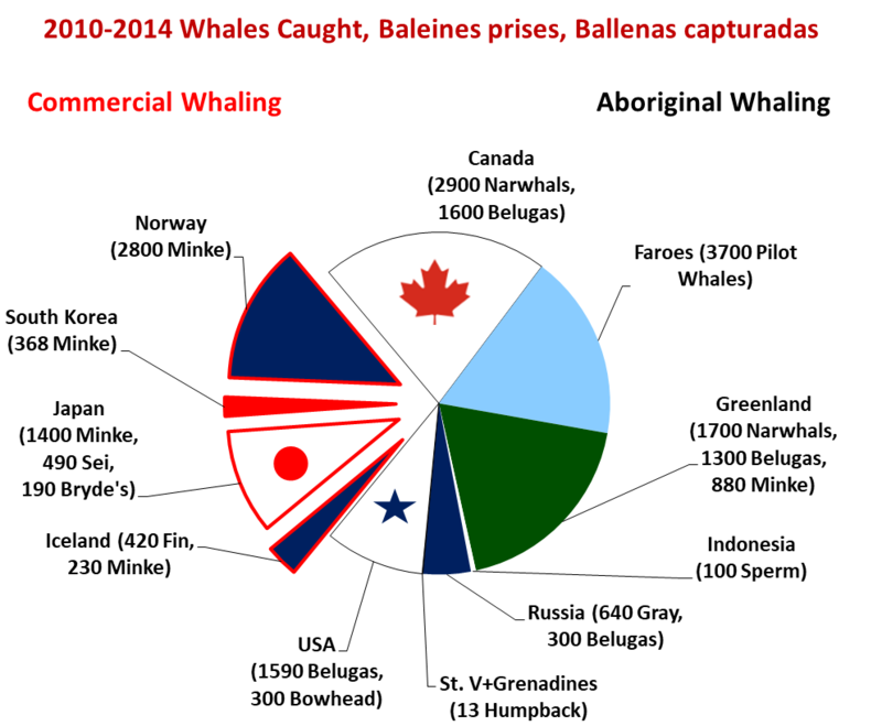 800px-whales_caught_recently.png