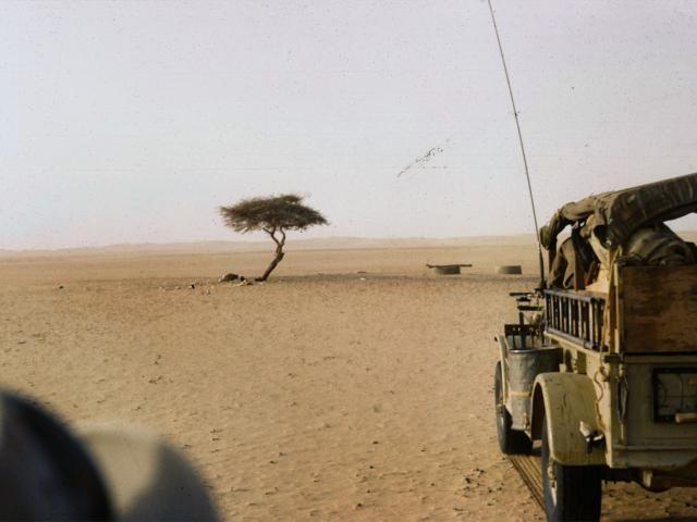 arbre-du-tenere-1961.jpg