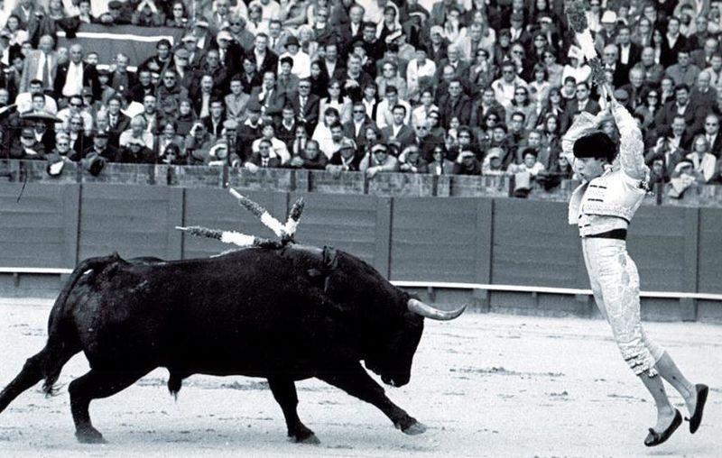 banderillero_curro_molina.jpg