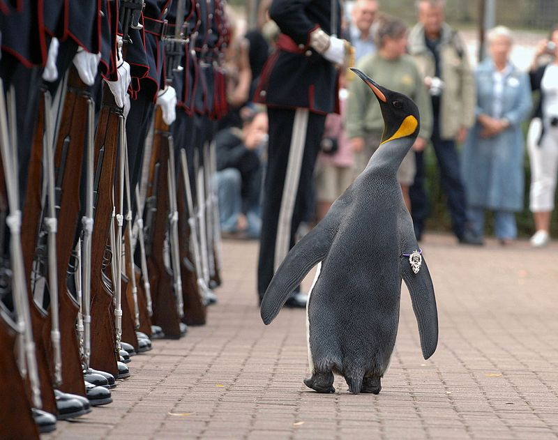 nils_olav_inspects_the_kings_guard_of_norway_after_being_bestowed_with_a_knighthood_at_edinburgh_zoo_in_scotland.jpg