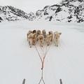 Grönlandi nyelvóra és egy kis hagyományismeret