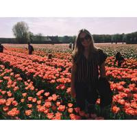 Öt hónap Hollandiában - Egy felejthetetlen élmény