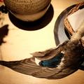 Fermentált mókus, kacsaagy saját nyelvével kanalazva, és persze hangyák a Noma vadmenüjében