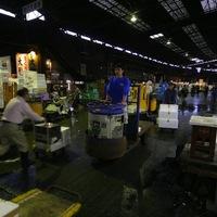 Tokió: hajnali tonhalárverés a legendás Tsukiji halpiacon